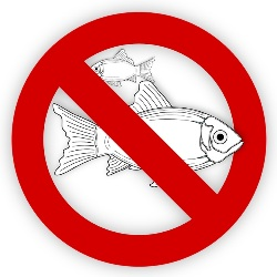 Emergenze - No fish